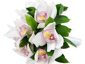 Интересные факты про орхидеи