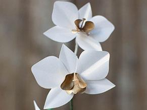 Бумажная орхидея