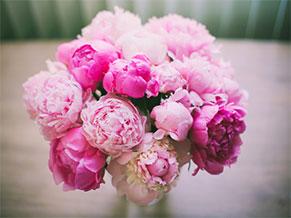 Пионы - значение цветов