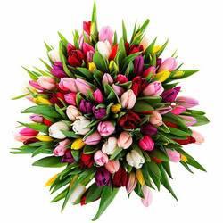 Пестрый букет тюльпанов