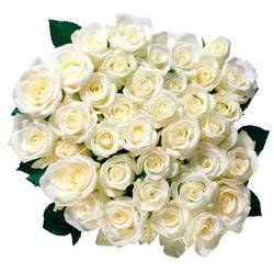 живые розы молочно-белого цвета.jpeg