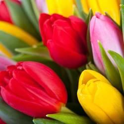 тюльпаны для вручения на счастье.jpeg