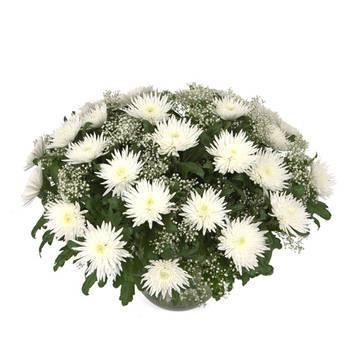 огромный белоснежный букет хризантем.jpeg