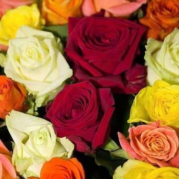 искрящиеся лепестки красивых роз.jpeg