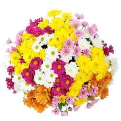 разноцветный цветочный шар из хризантем.jpeg