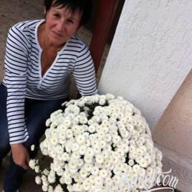 Букет белых хризантем для любимой бабушки - фото