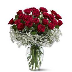 расцветающие среди гипсофилы красные розы.jpeg