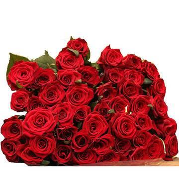 шедевральные красные розы.jpeg