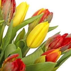тюльпановое разноцветье.jpeg