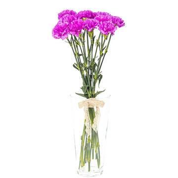 пурпурные свежие гвоздики.jpeg