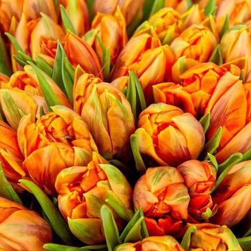 плотные бутоны цветов.jpeg