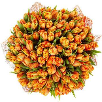 непревзойденные пионовые тюльпаны.jpeg