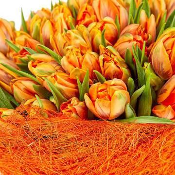 модный оранжевый цвет тюльпанов.jpeg