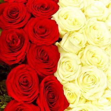 101 качественная роза.jpeg