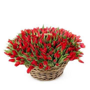 Алые цветы в корзине