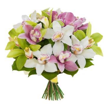 orhidei.jpeg