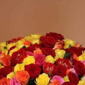 Большой букет разноцветных, украинских роз для девушки - фото