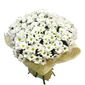 хризантемы-ромашки для романтических леди.jpeg
