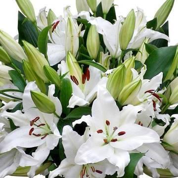 огромные цветы белоснежных лилий.jpeg