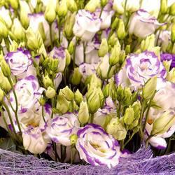 цветы и лепестки фарфоровой эустомы.jpeg