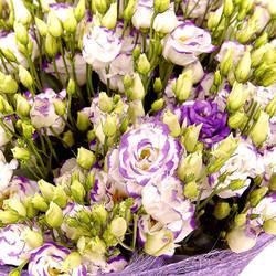 копна холодных хрустальных цветов.jpeg