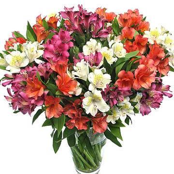 разноцветье ярких лепестков альстромерии.jpeg